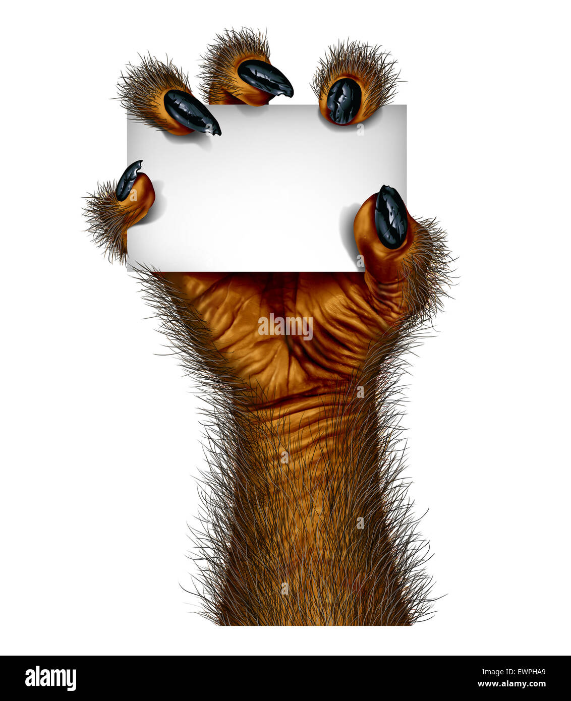 Werewolf hand holding a blank card sign as a creepy creature for halloween or scary symbol with textured hairy and - Stock Image