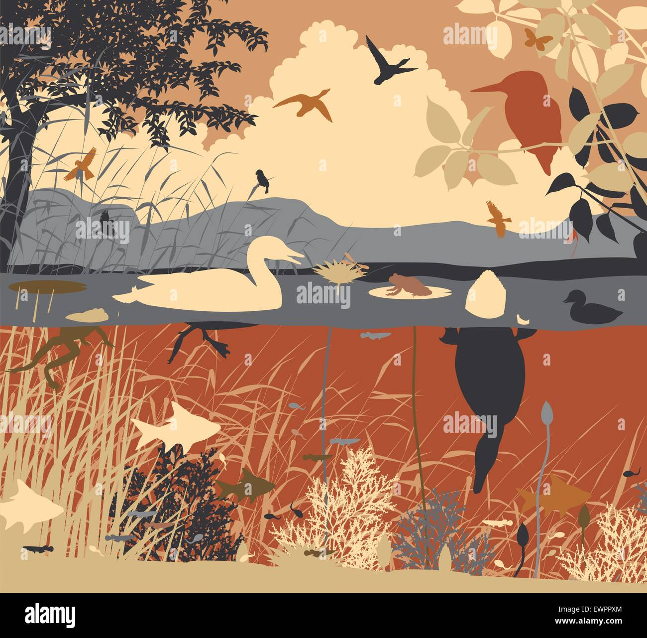 EPS8 editable vector illustration of diverse wildlife in a freshwater ecosystem with all figures as separate objects - Stock Image