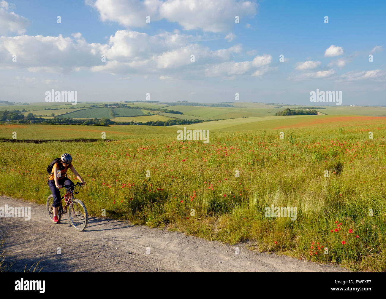 19 June 2015 - Falmer, near Brighton, UK : A cyclist on the new cycle track between Falmer and Woodingdean, segregated - Stock Image