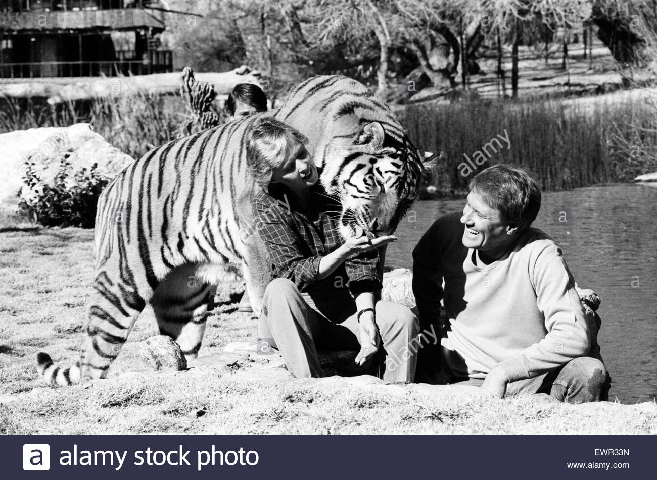 Noel Marshall and Tippi Hedren with their animals on their San Fernando Valley compound. 25th January 1982. - Stock Image