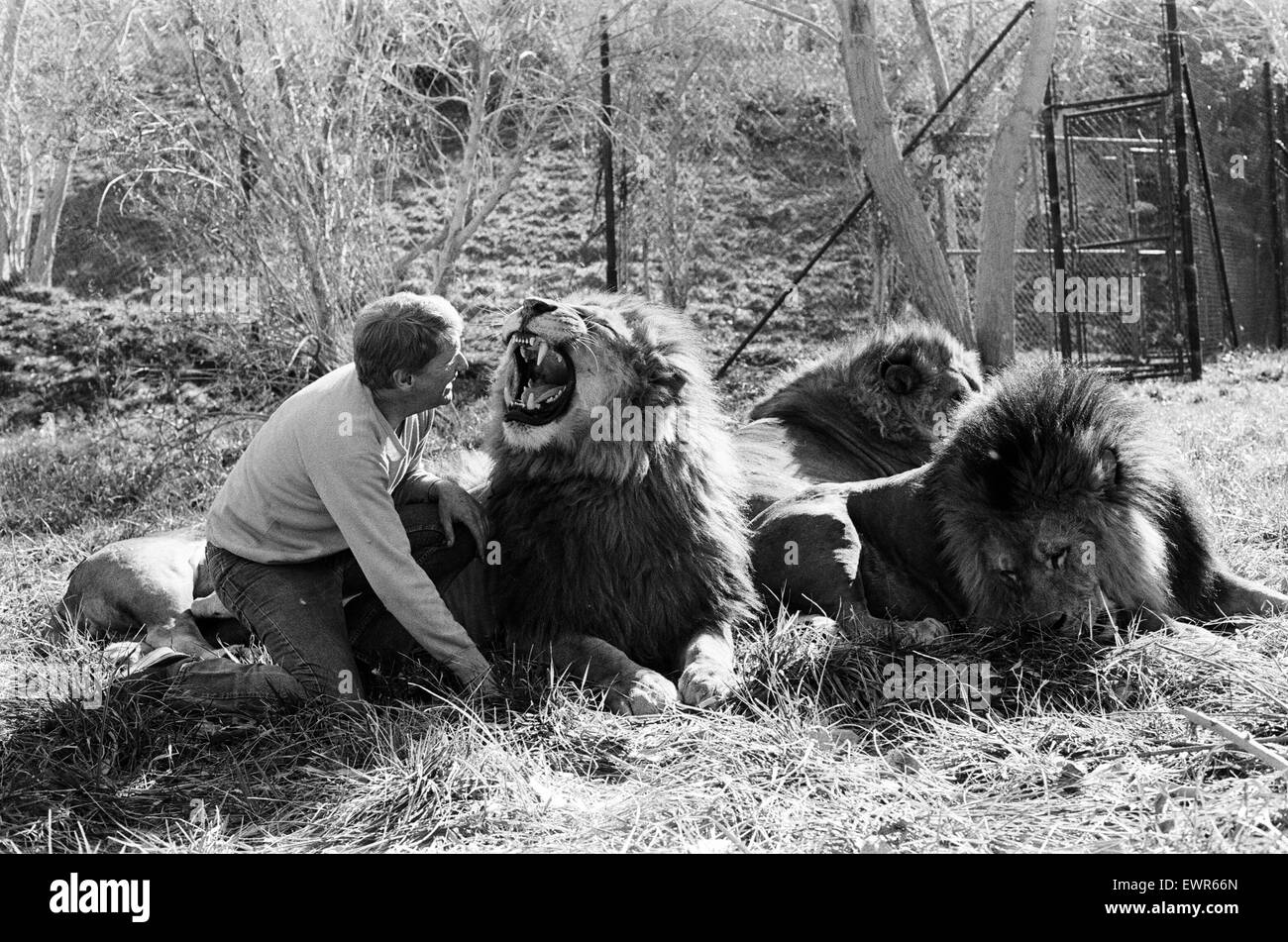 Noel Marshall with his animals on his San Fernando Valley compound. 25th January 1982. - Stock Image