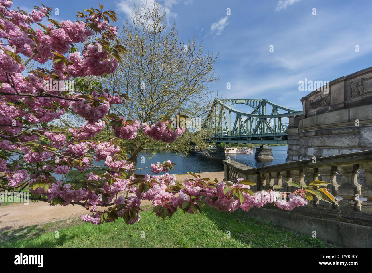 Glienicker Bridge , Glienecker Bruecke, Cherry Blossom, Havel River, - Stock Image