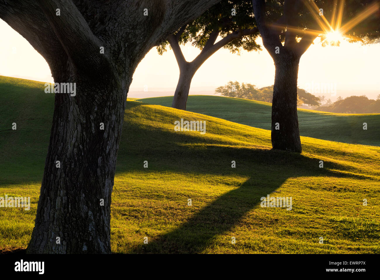 Sunrise through trees and lawn at Four Seasons Hotel, Hawaii, The Big Island. - Stock Image