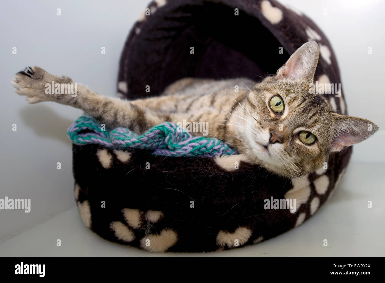 cat stretching its basket - Stock Image