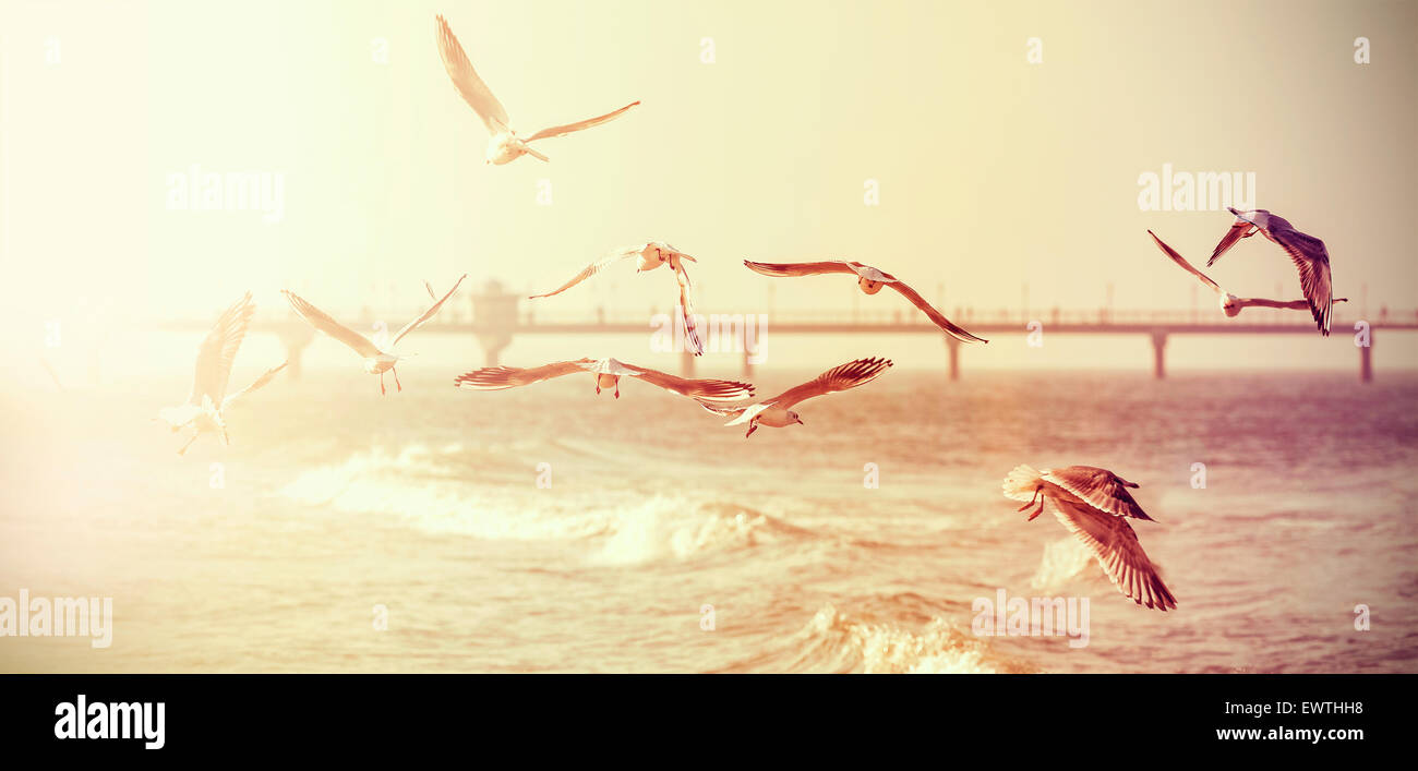 Vintage retro stylized photo of a seagulls, old film effect. - Stock Image