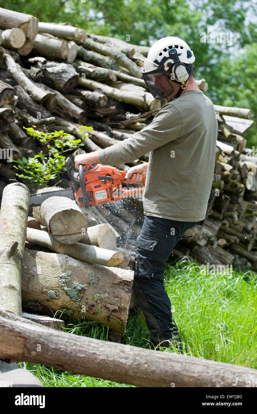 Herefordshire, UK. Tree surgeon / arborist cuts cord wood into logs with a chainsaw ready for burning . © Becky - Stock Image