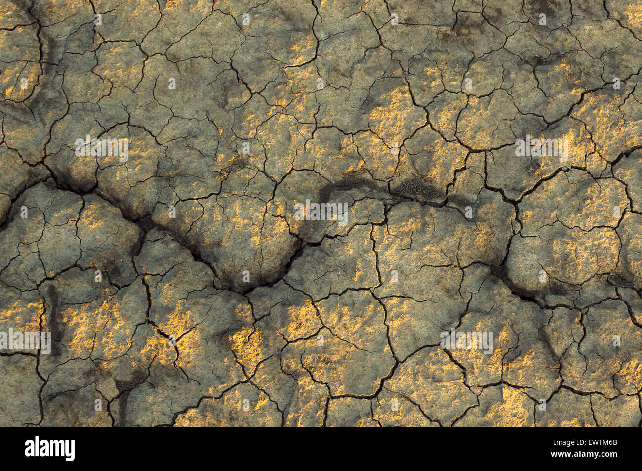 Dry soil texture on the ground. Selective focus. - Stock Image