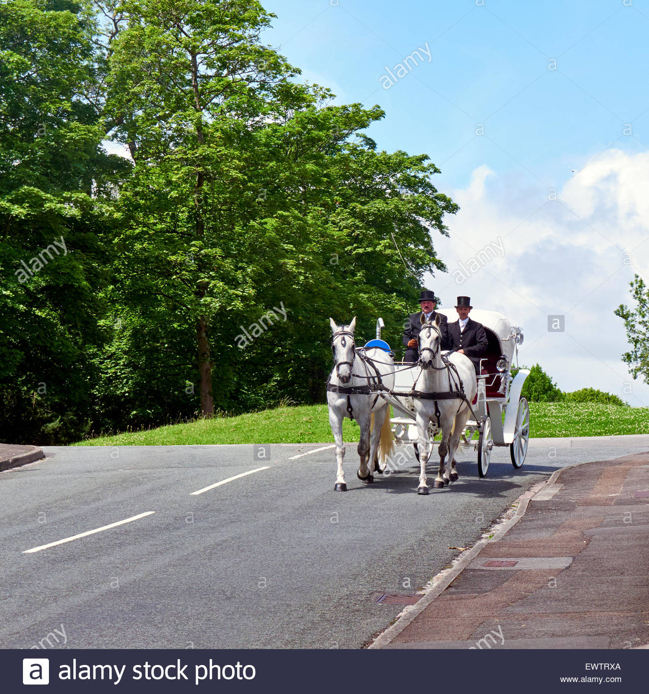 driver and footman on a white wedding carriage being drawn by two white horses - Stock Image
