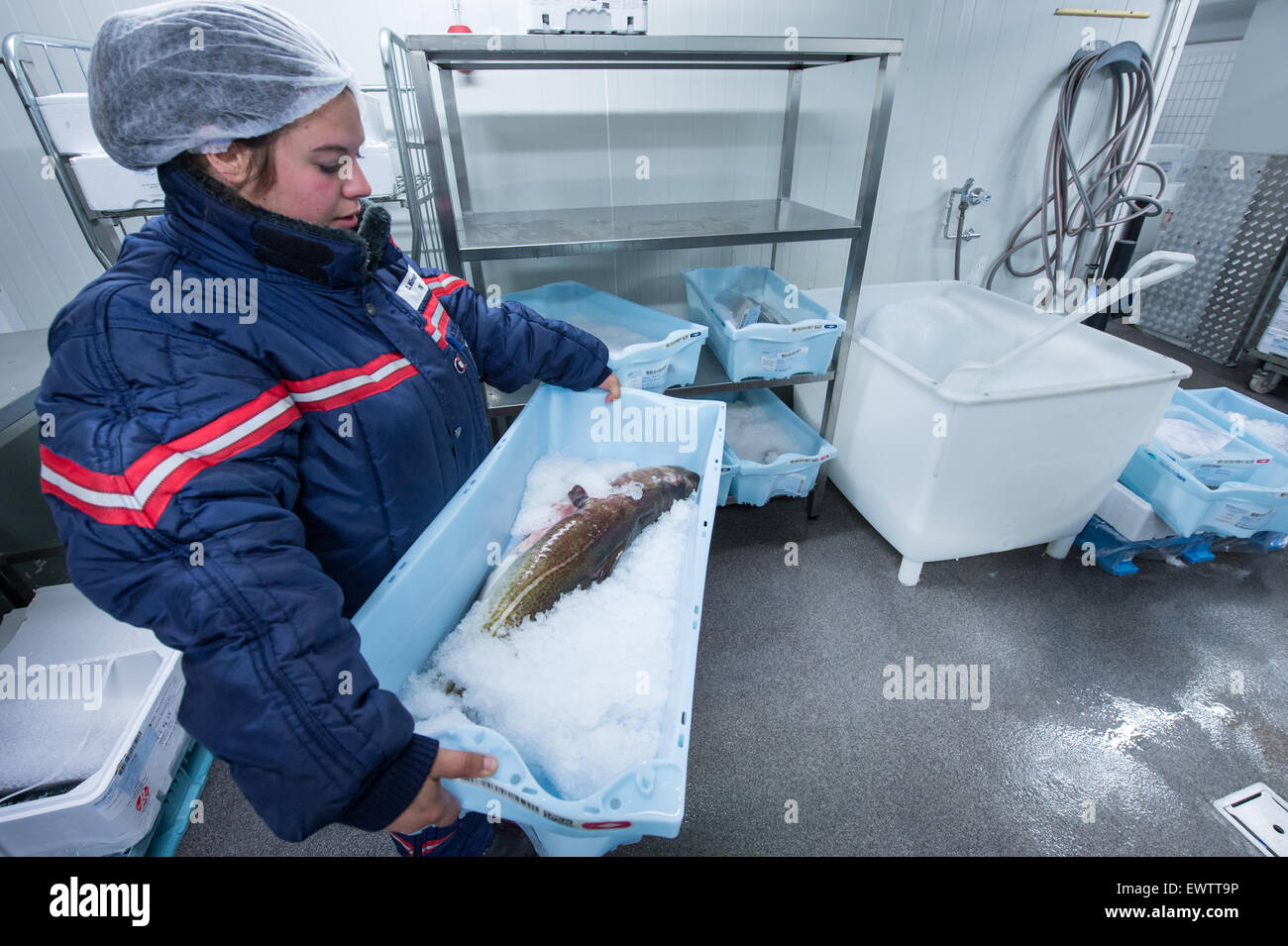 Fish Wholesaler Stock Photos & Fish Wholesaler Stock Images - Alamy