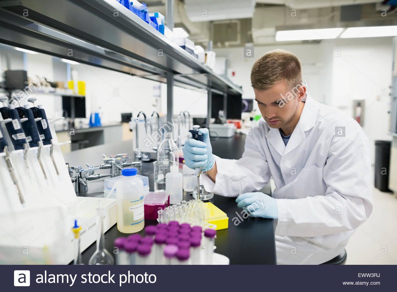 Scientist with pipette filling tray in laboratory - Stock Image