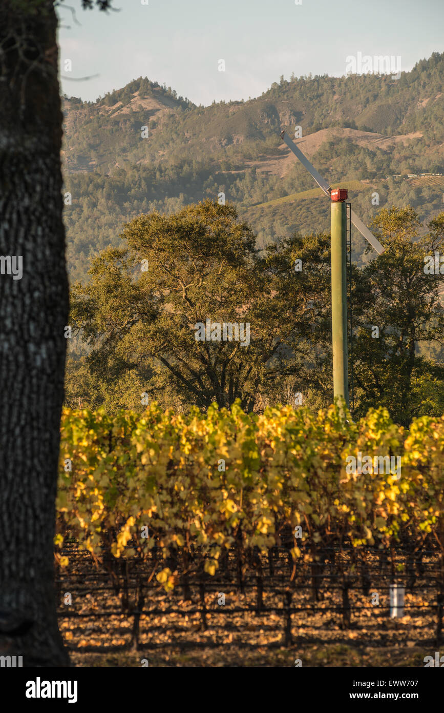 Wind turbine inside California vineyard with mountains in background - Stock Image
