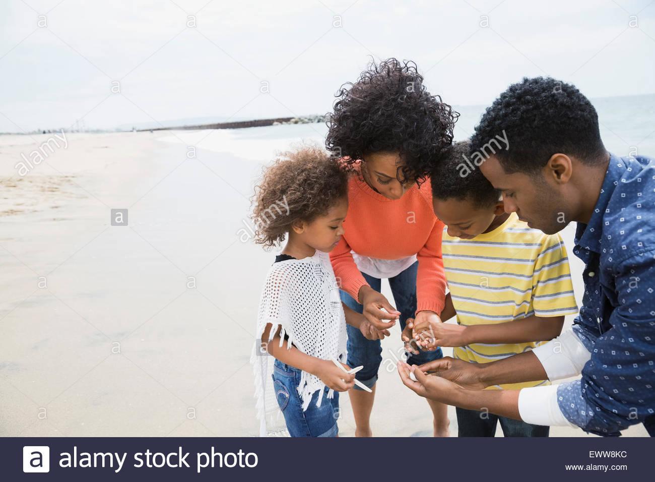 Family gathering seashells on beach - Stock Image