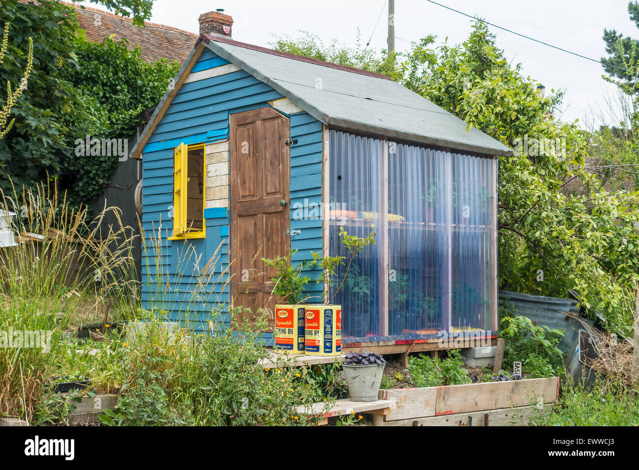 Allotment Shed and Greenhouse - Stock Image