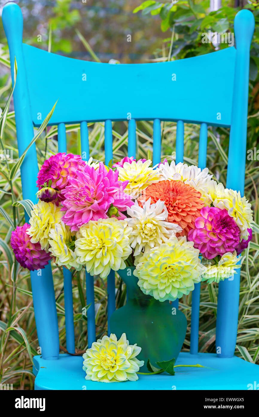 A vase of dahlia cut flowers on a pretty blue chair in the garden. - Stock Image