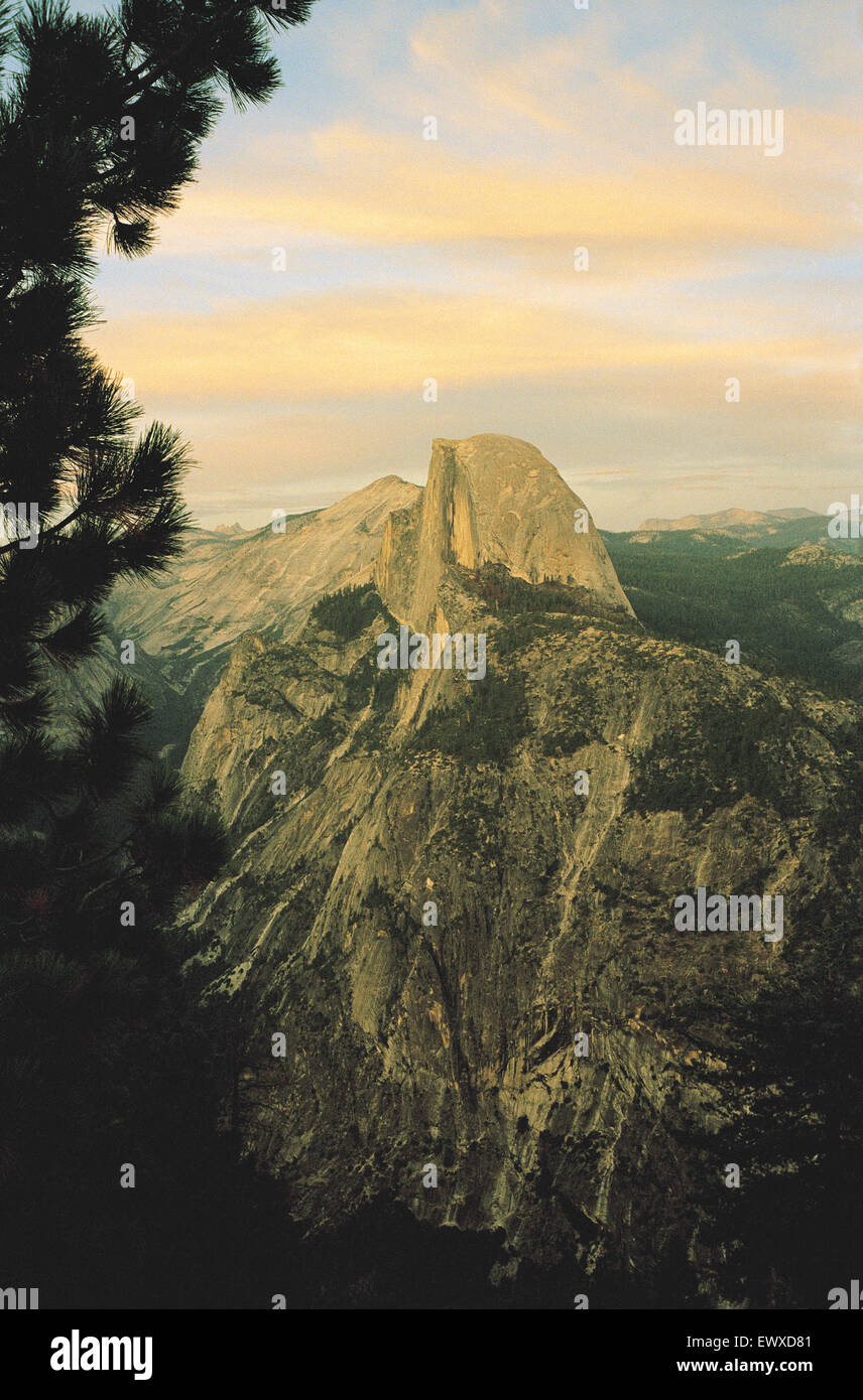 View of Half Dome in the warm evening light, with fir tree in view, Yosemite National Park, California. - Stock Image