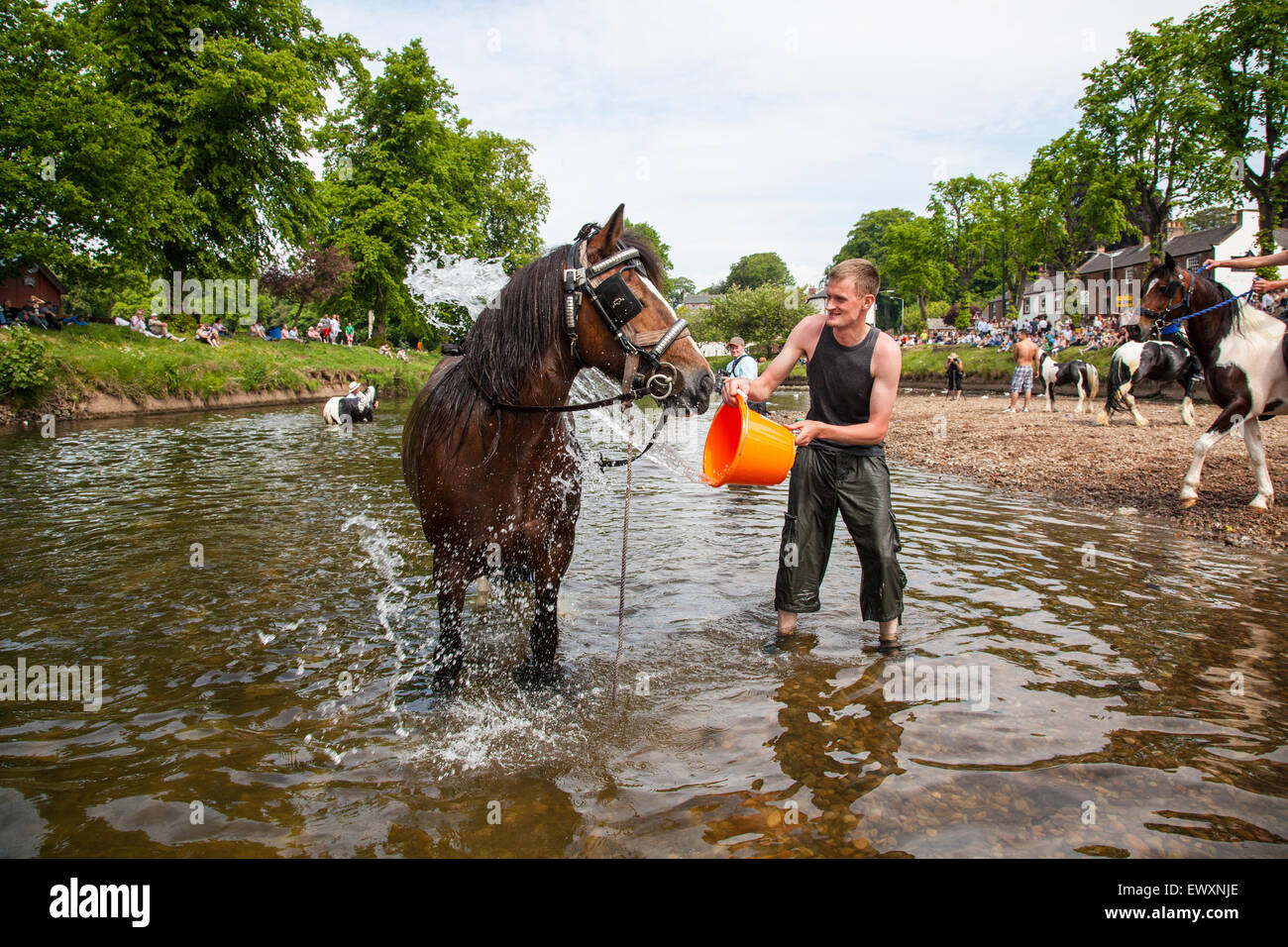 Washing a horse in the river during Appleby Horse Fair - Stock Image
