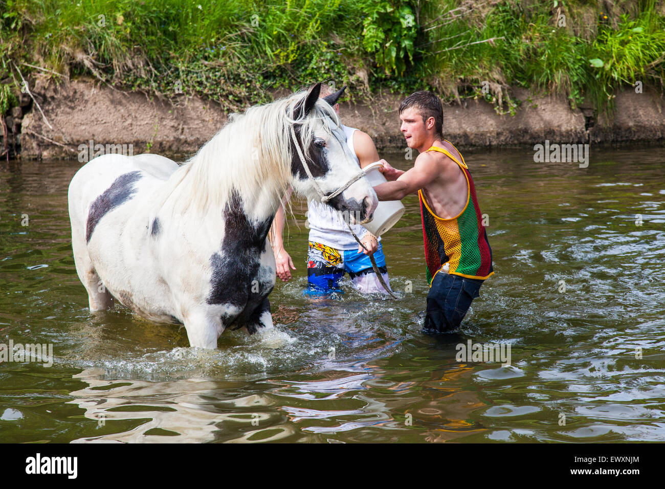 Washing horses in the river during Appleby Horse Fair - Stock Image