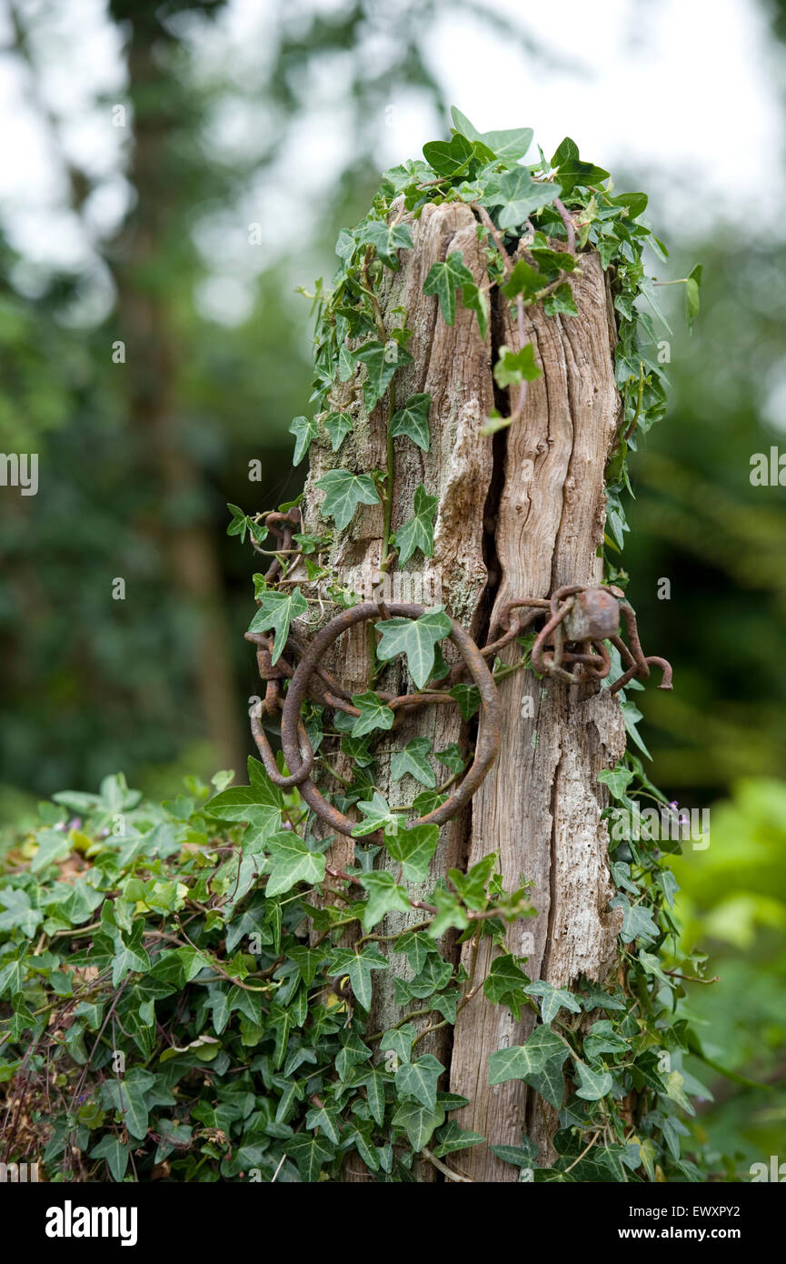 old disused gatepost covered in ivy - Stock Image