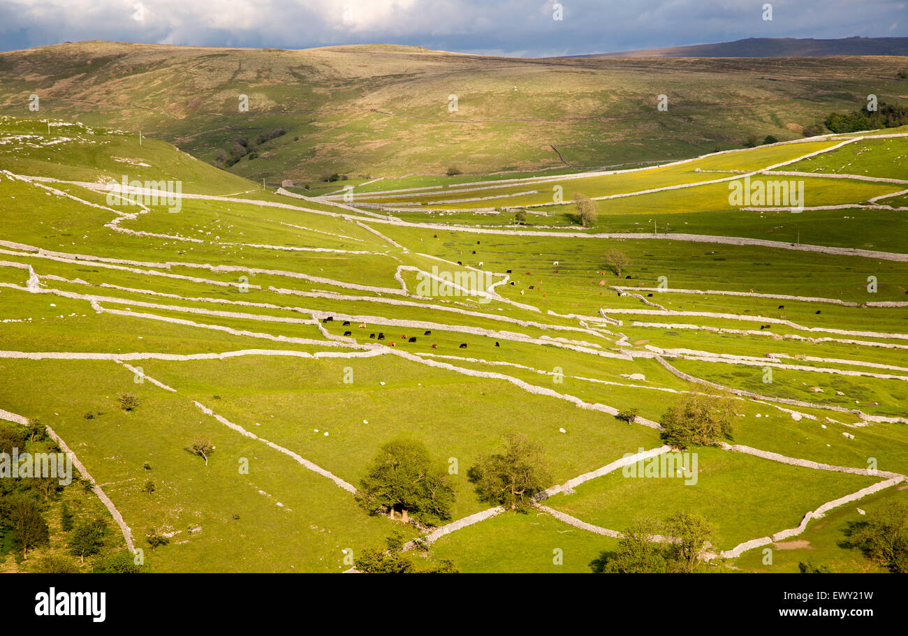 Fields and dry stonewalls, Malham, Yorkshire Dales national park, England, UK - Stock Image