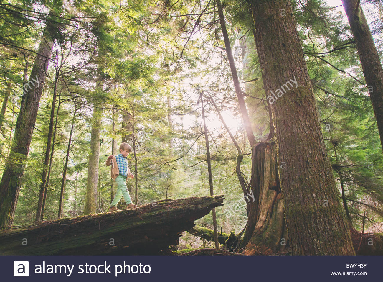 Young boy walking on fallen tree in the woods - Stock Image