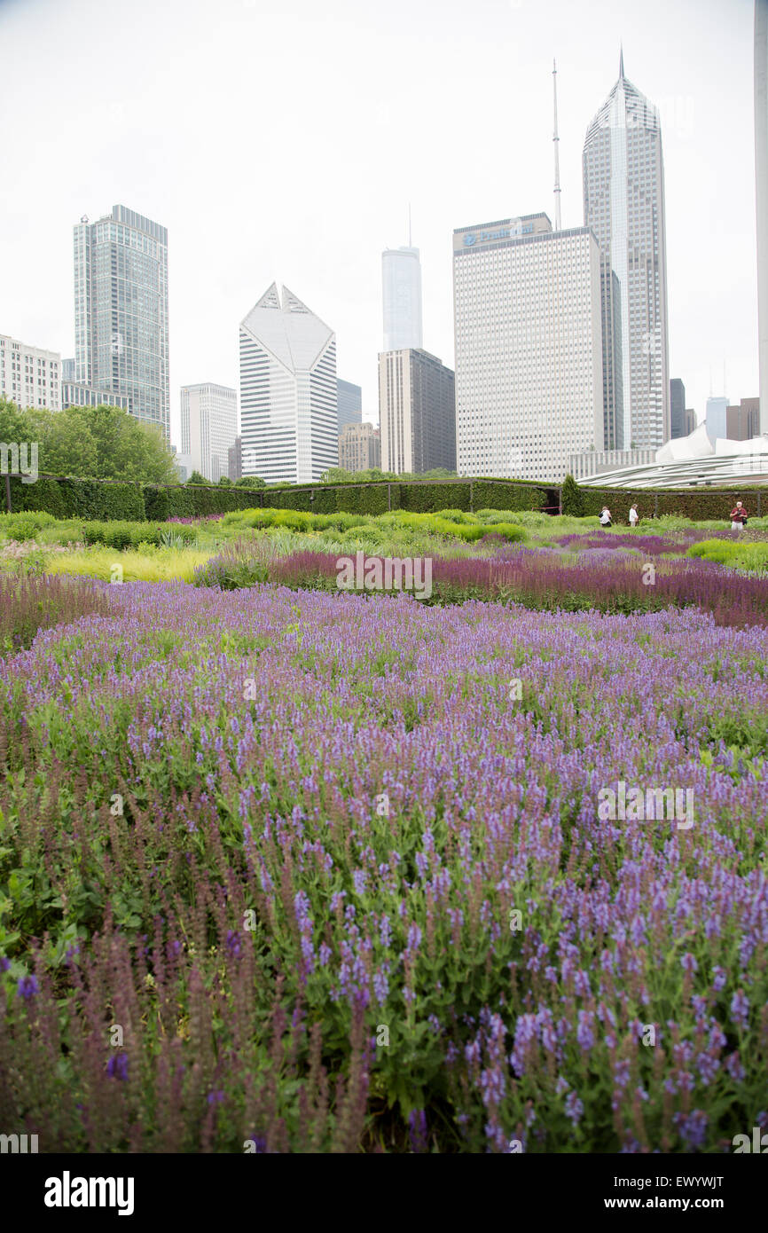Millennium Park in downtown Chicago, Illinois with June gardens in bloom and the Chicago skyline. - Stock Image