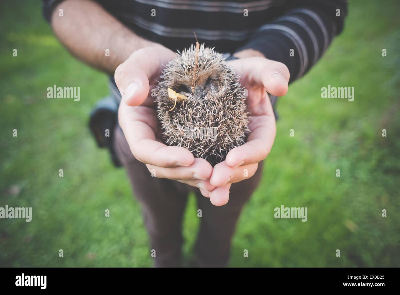 Man holding hedgehog - Stock Image