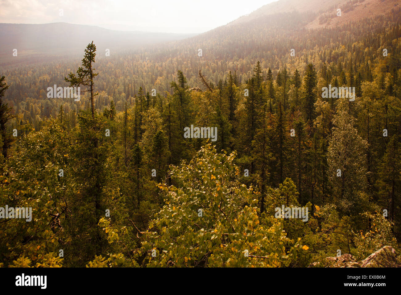 View of forest valley, Sarsy Village, Sverdlovsk Oblast, Russia - Stock Image