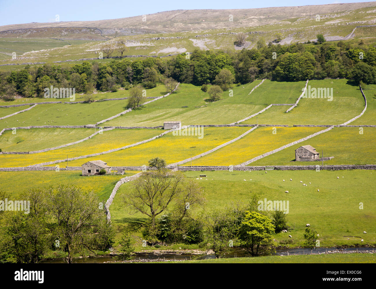 Attractive countryside River Wharf valley, Wharfedale, Kettlewell, Yorkshire Dales national park, England, UK - Stock Image