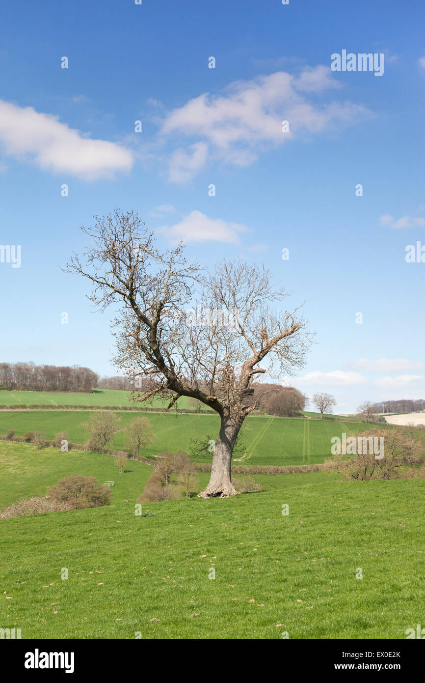 View across rolling green countrside at Great Givendale near Bishop Wilton, Yorkshire Wolds, East Yorkshire, UK - Stock Image