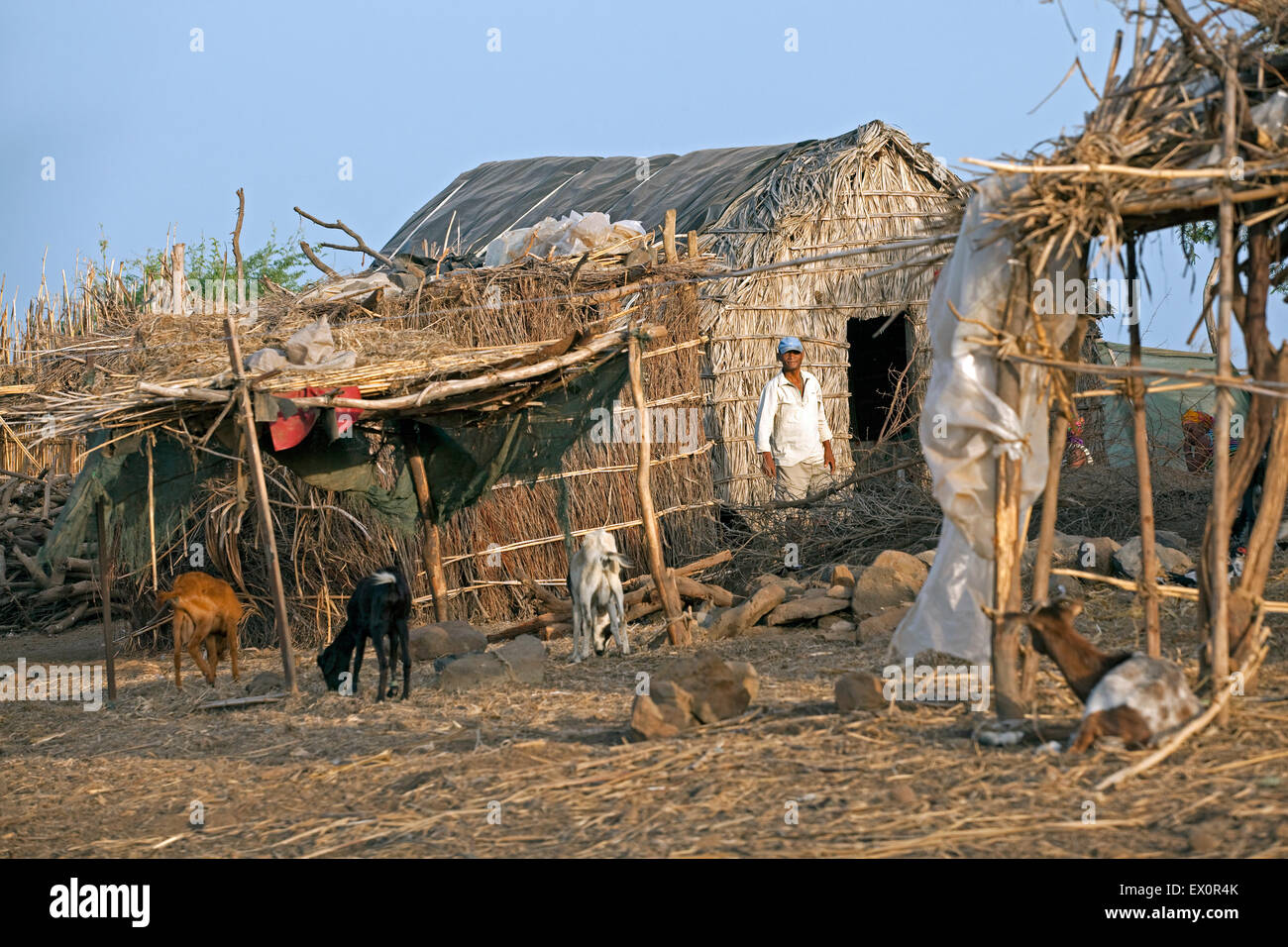 Traditional hut and goats as livestock at a little farm in the village Rebelados on the island Santiago, Cape Verde, - Stock Image