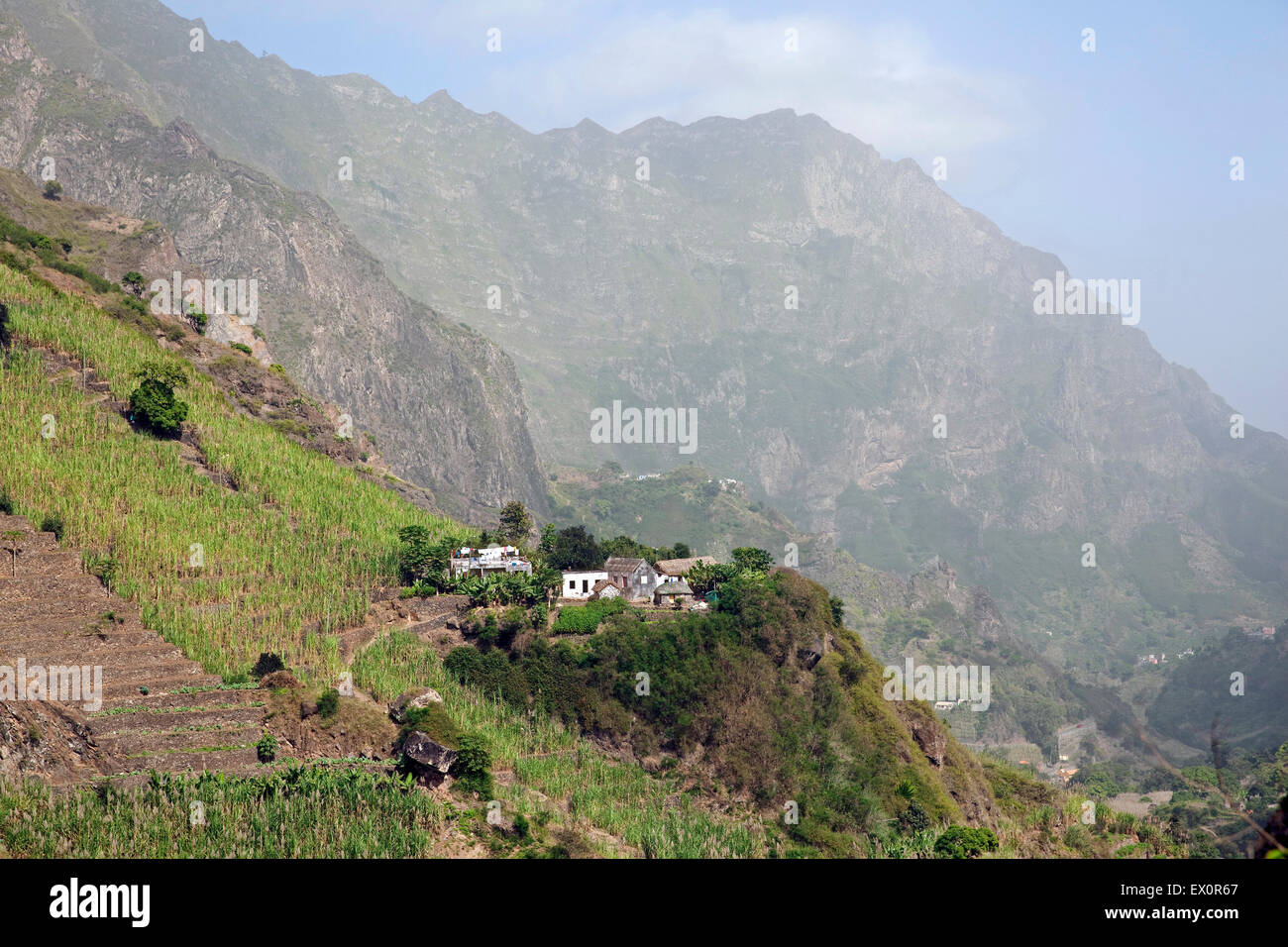 Terraced field with sugar cane plants in the Ribeira Grande Valley on the island Santo Antão, Cape Verde / - Stock Image
