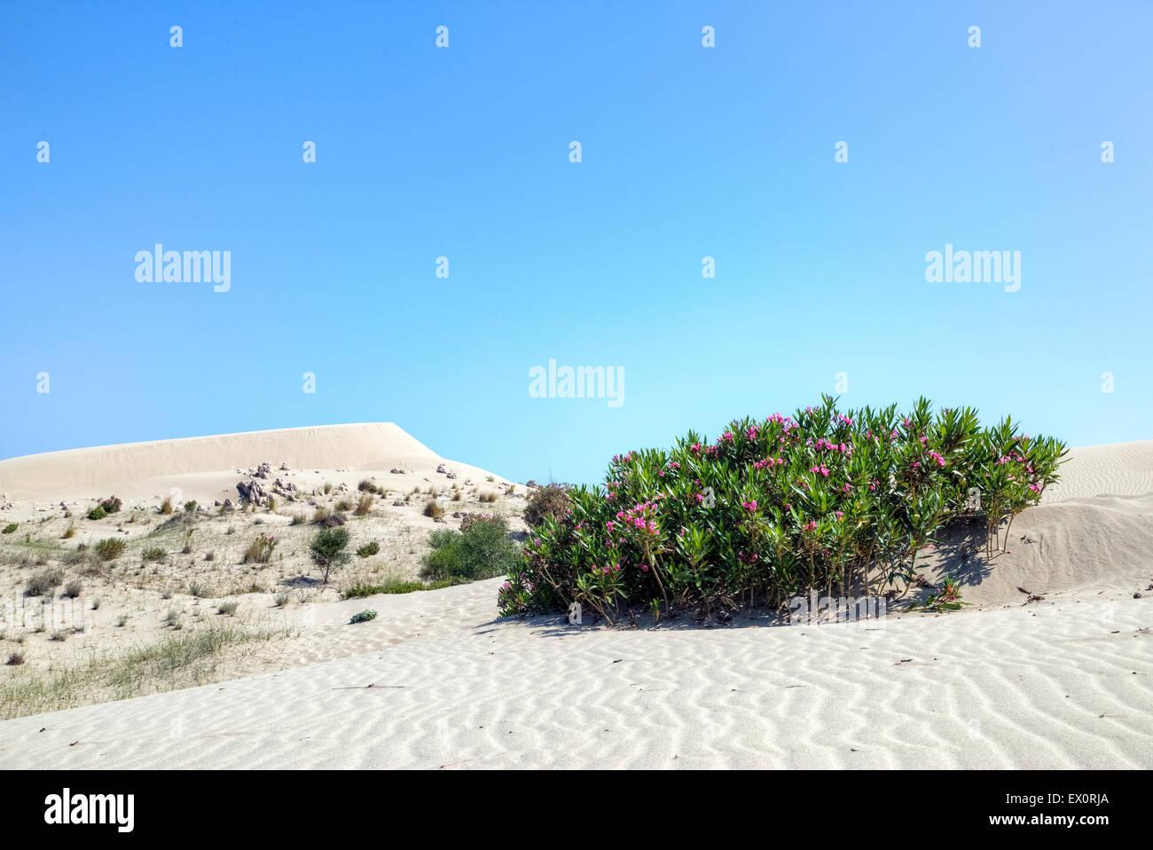 Patara beach, Lycia, Kalkan, Antalya, Turkey - Stock Image