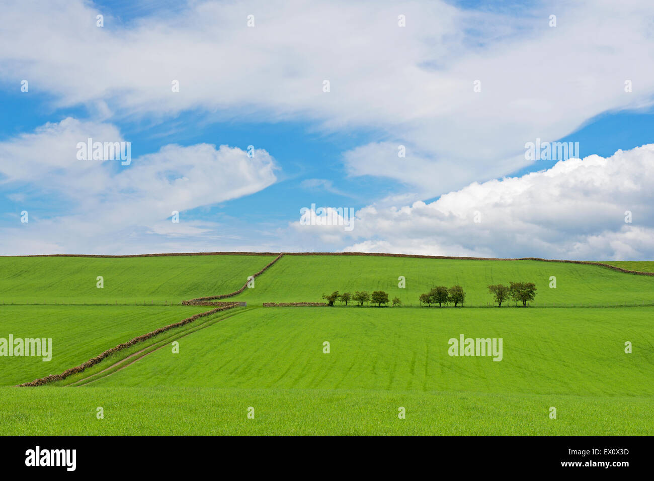 Fields in the Eden Valley, Cumbria, England UK - Stock Image