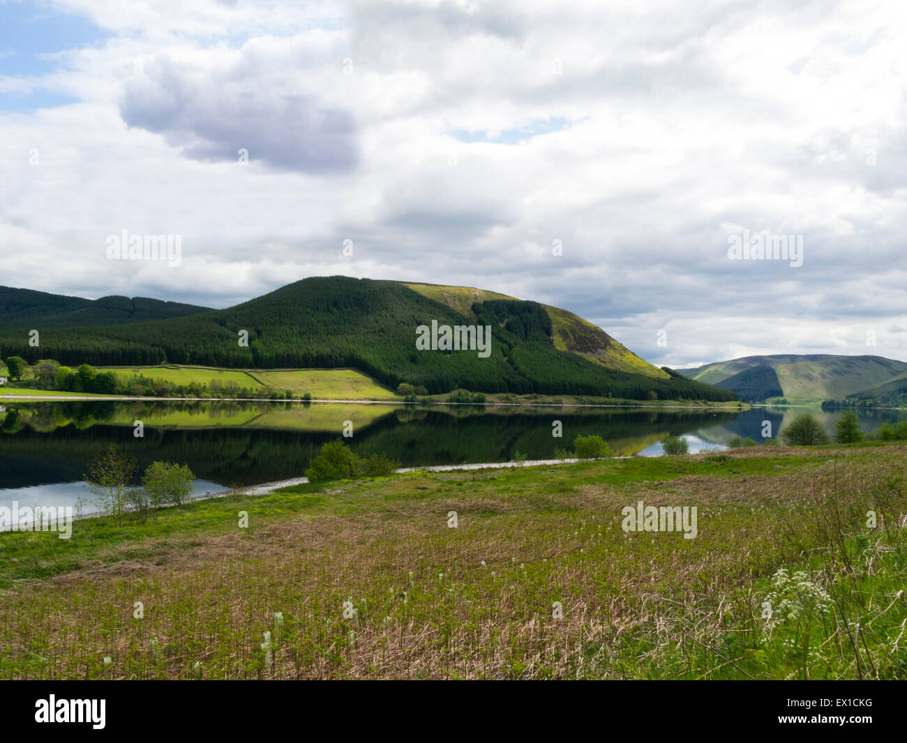 Reflections in Loch of the Lowes upstream from St Marys Loch fed by Megget Water the source of Yarrow water Selkirk - Stock Image