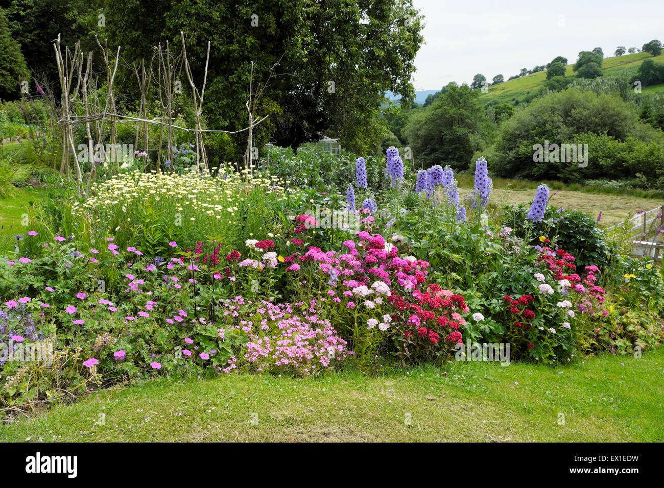 View of a colourful organic rural herbaceous border country garden in bloom set in the countryside in West Wales - Stock Image