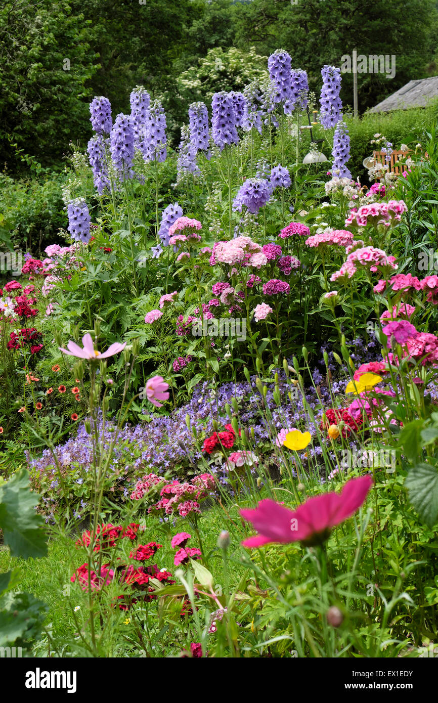 Cottage garden in summer with colourful flowers in a herbaceous border of mixed perennials and annuals growing in - Stock Image