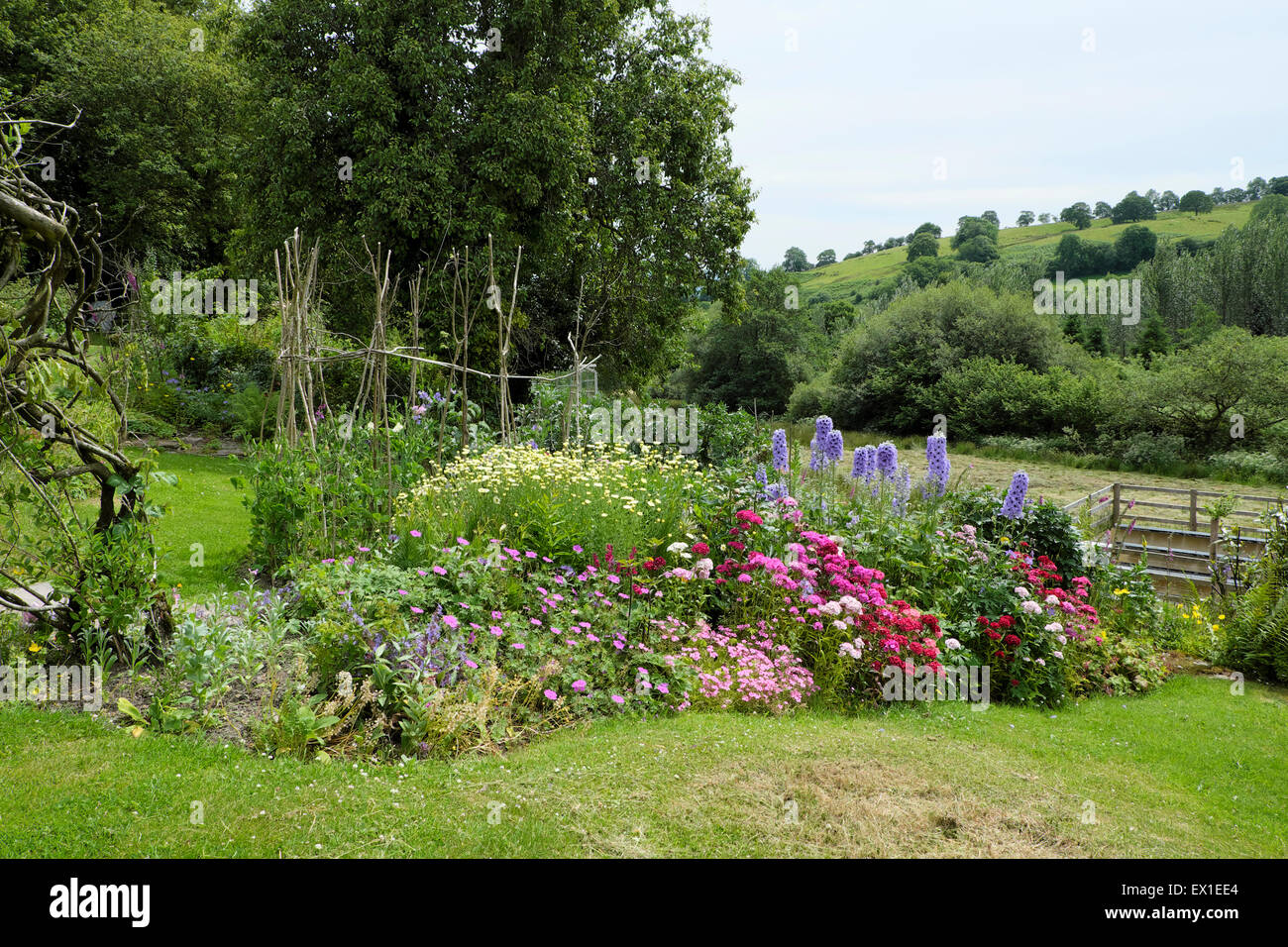 Colorful perennials in a herbaceous flower border in a rural country cottage garden Carmarthenshire Wales UK  KATHY - Stock Image