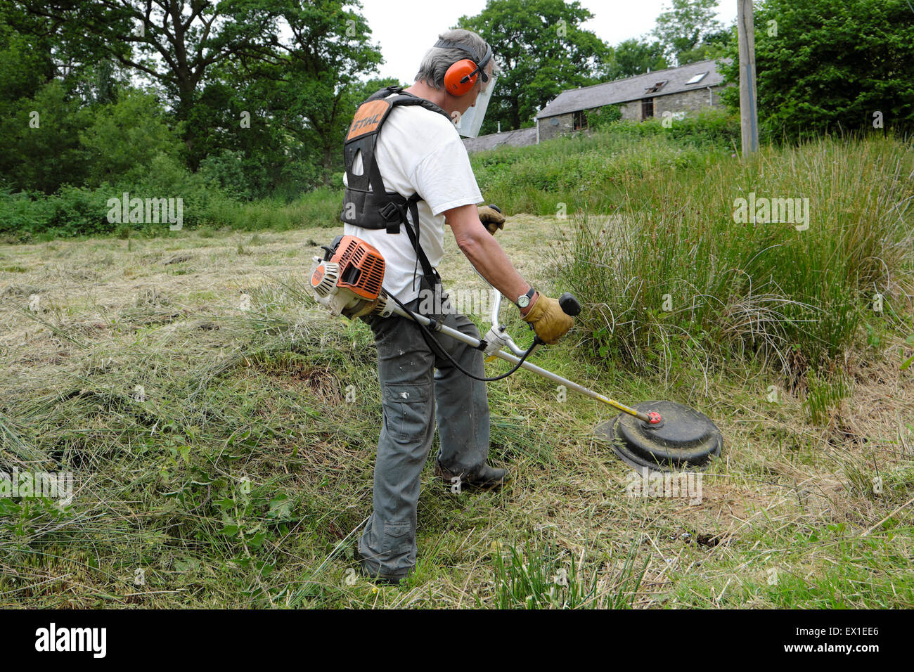 A man wearing safety equipment strimming reeds in a field on a smallholding in Carmarthenshire Wales UK  KATHY DEWITT - Stock Image