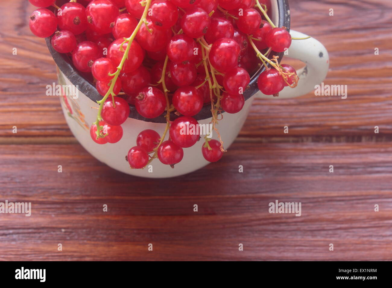 seen in the circle red currants - Stock Image