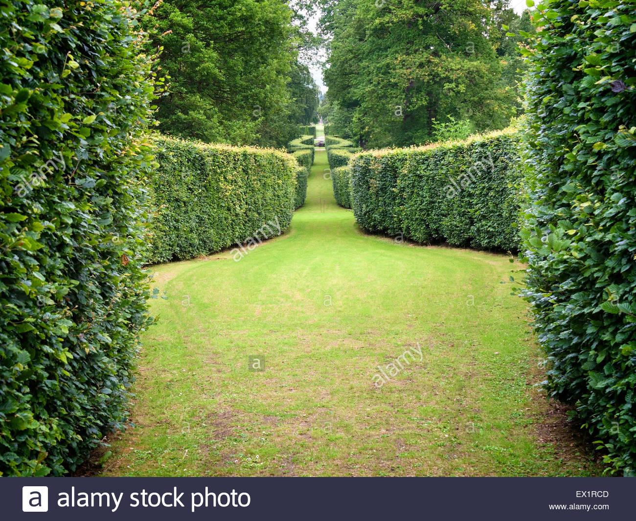 Serpentine beech hedge, Chatsworth garden, Derbyshire, England, UK - Stock Image