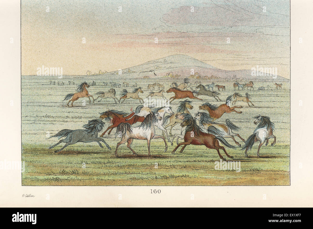 Herd of wild horses on the American plains. Handcoloured lithograph from George Catlin's Manners, Customs and - Stock Image