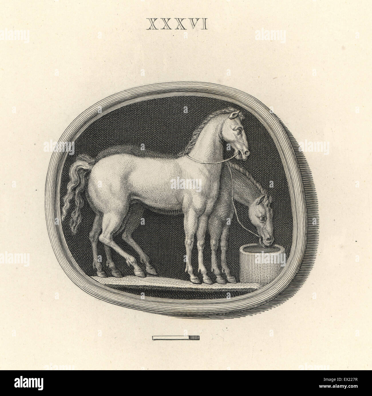 Two horses drinking water from a bucket. Copperplate engraving by Francesco Bartolozzi from 108 Plates of Antique - Stock Image