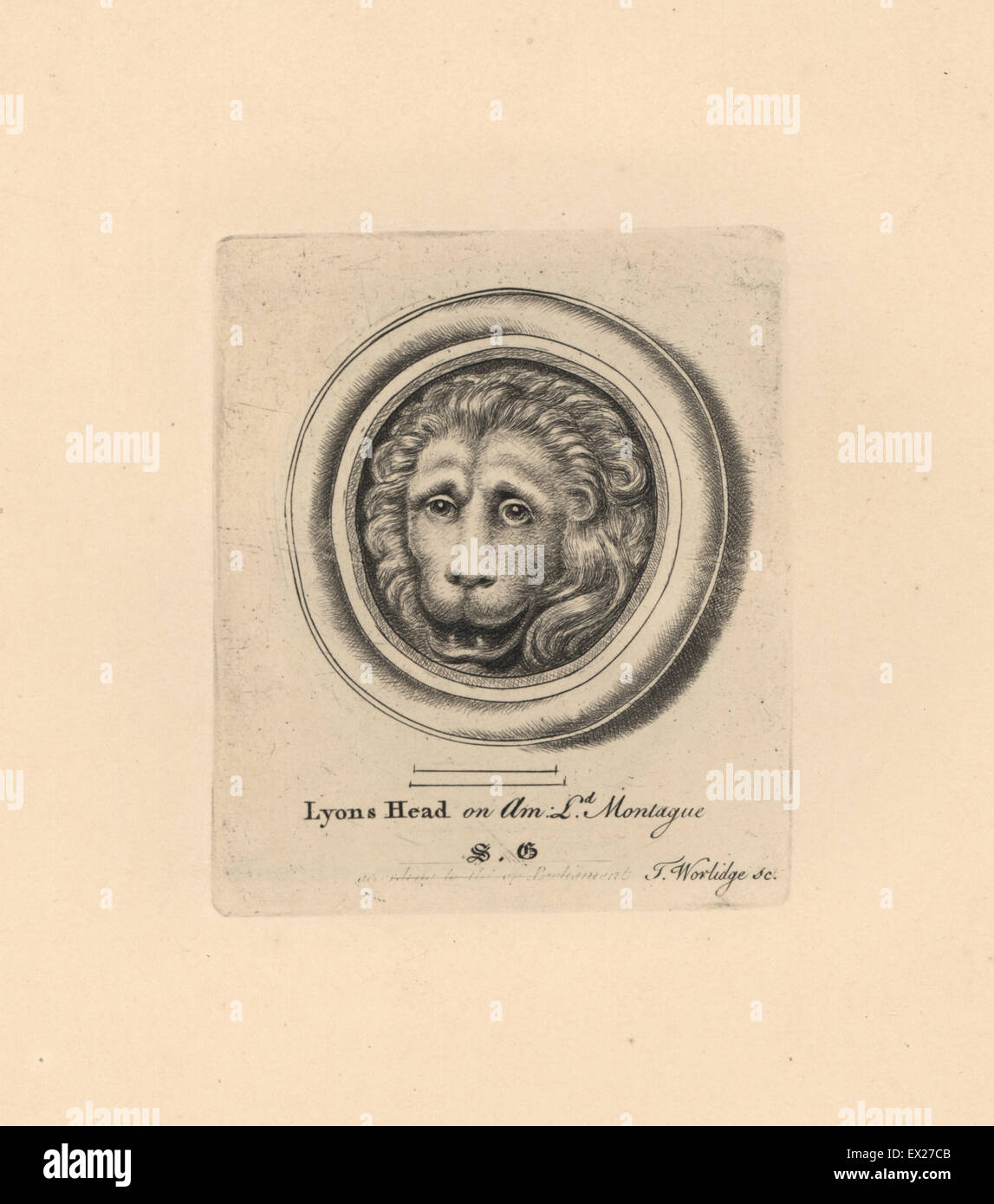 Portrait of a lion's head, on amethyst in Lord Montague's collection. Copperplate engraving by Thomas Worlidge - Stock Image