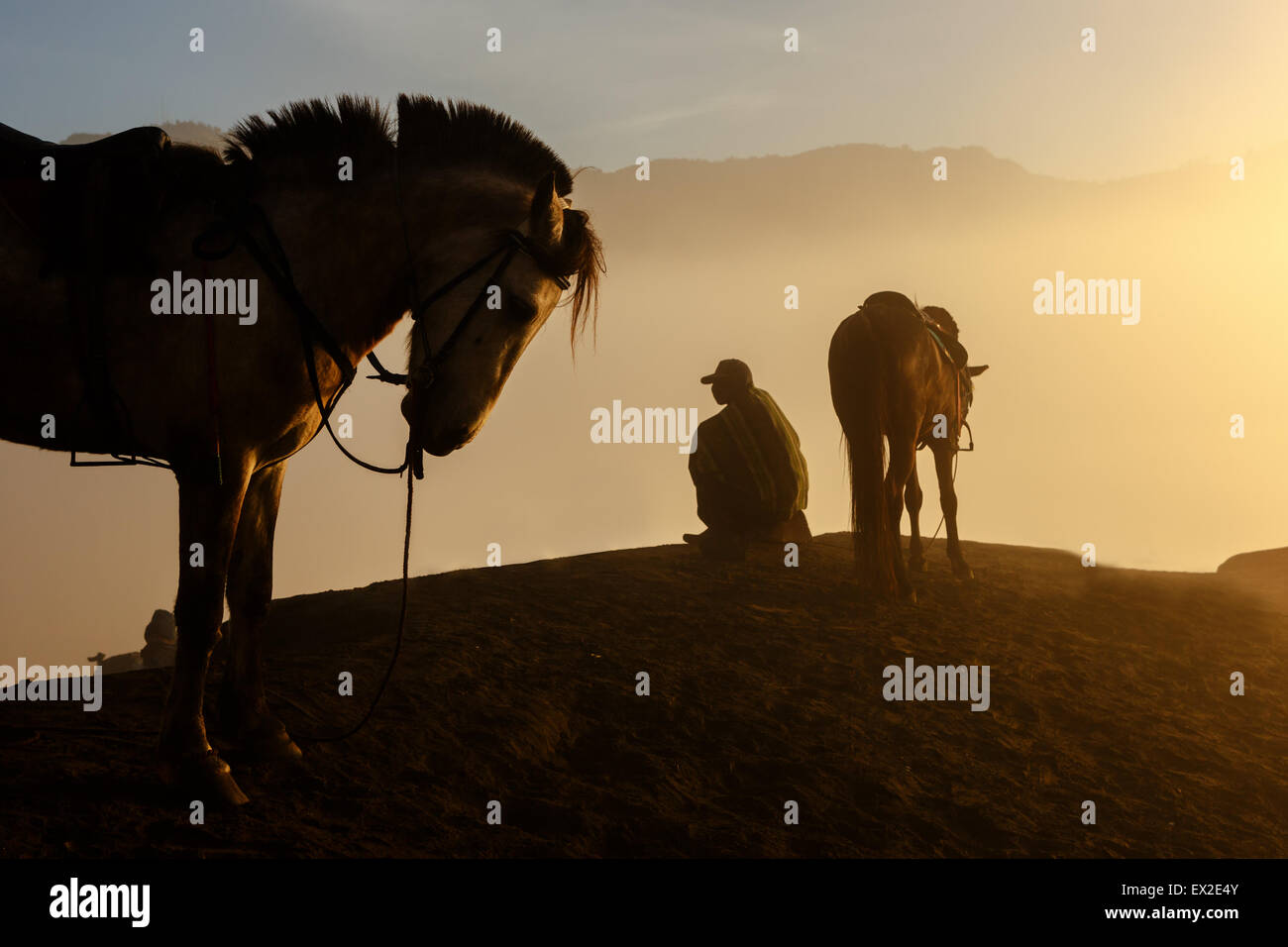 Silhouettes of men and the horses on the top of the hill with misty atmosphere - Stock Image
