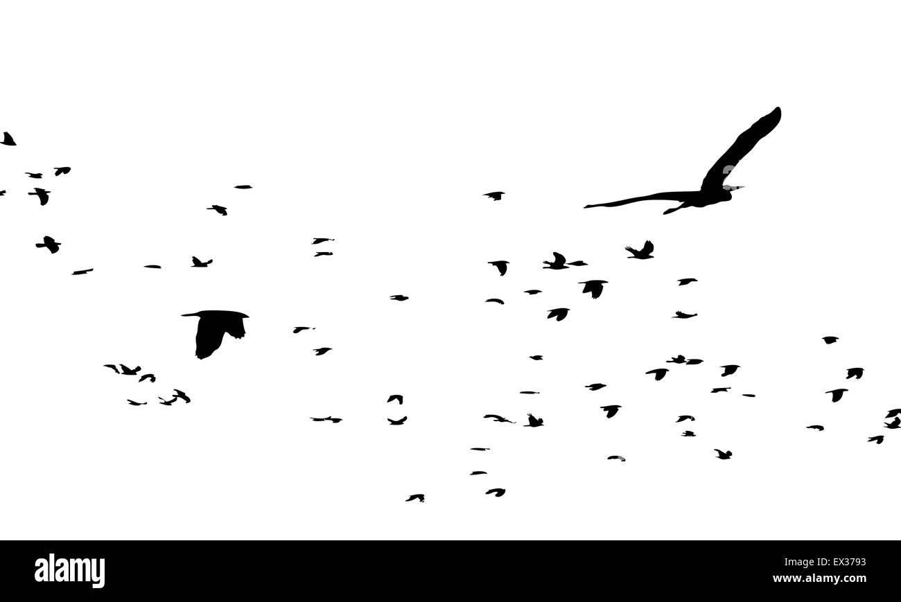 migratory birds - Stock Vector