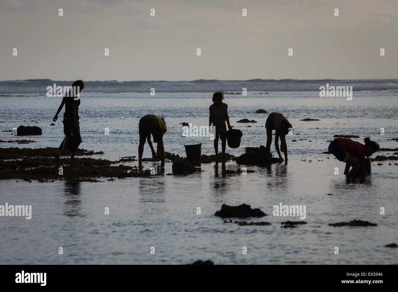 A group of women silhouetted against the bright light as they search the water for sea worms and other sea products - Stock Image