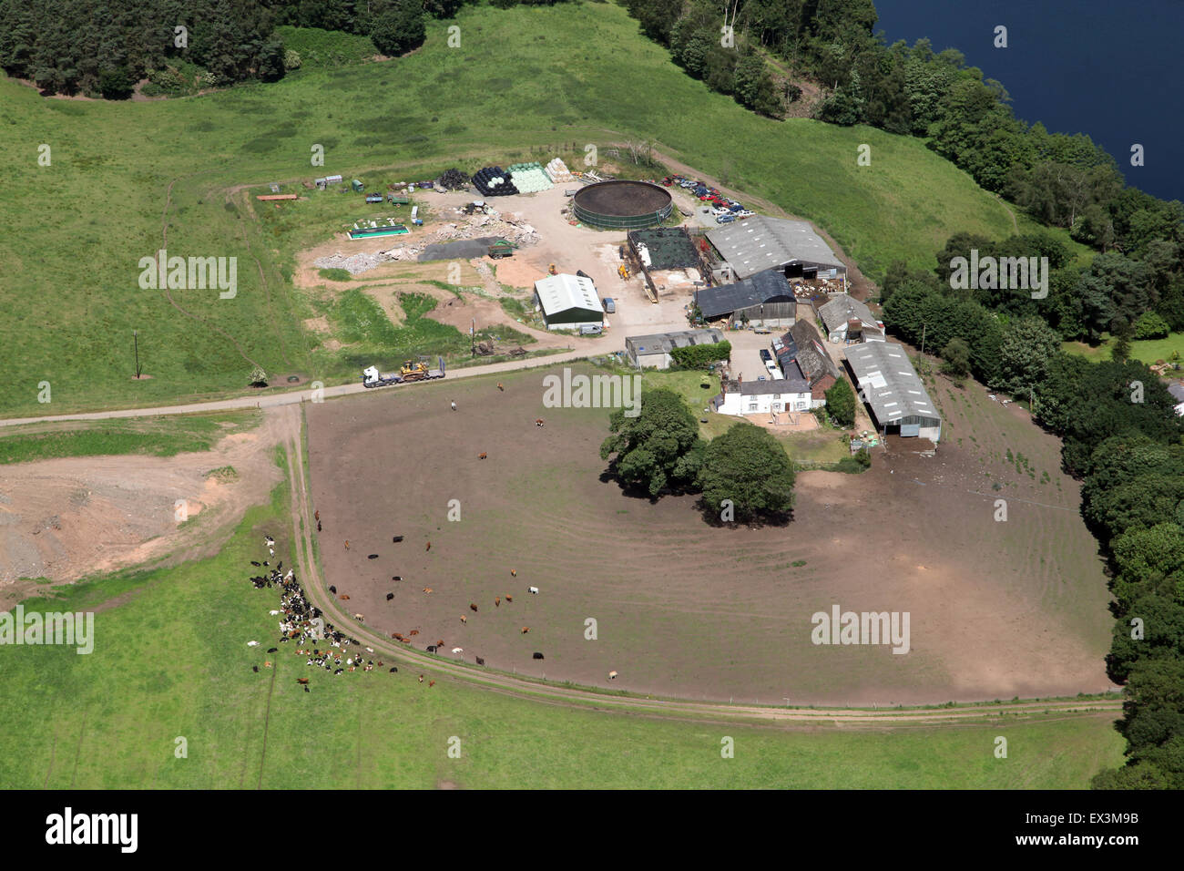 aerial view of a Cheshire dairy farm with cows and farm buildings, UK - Stock Image