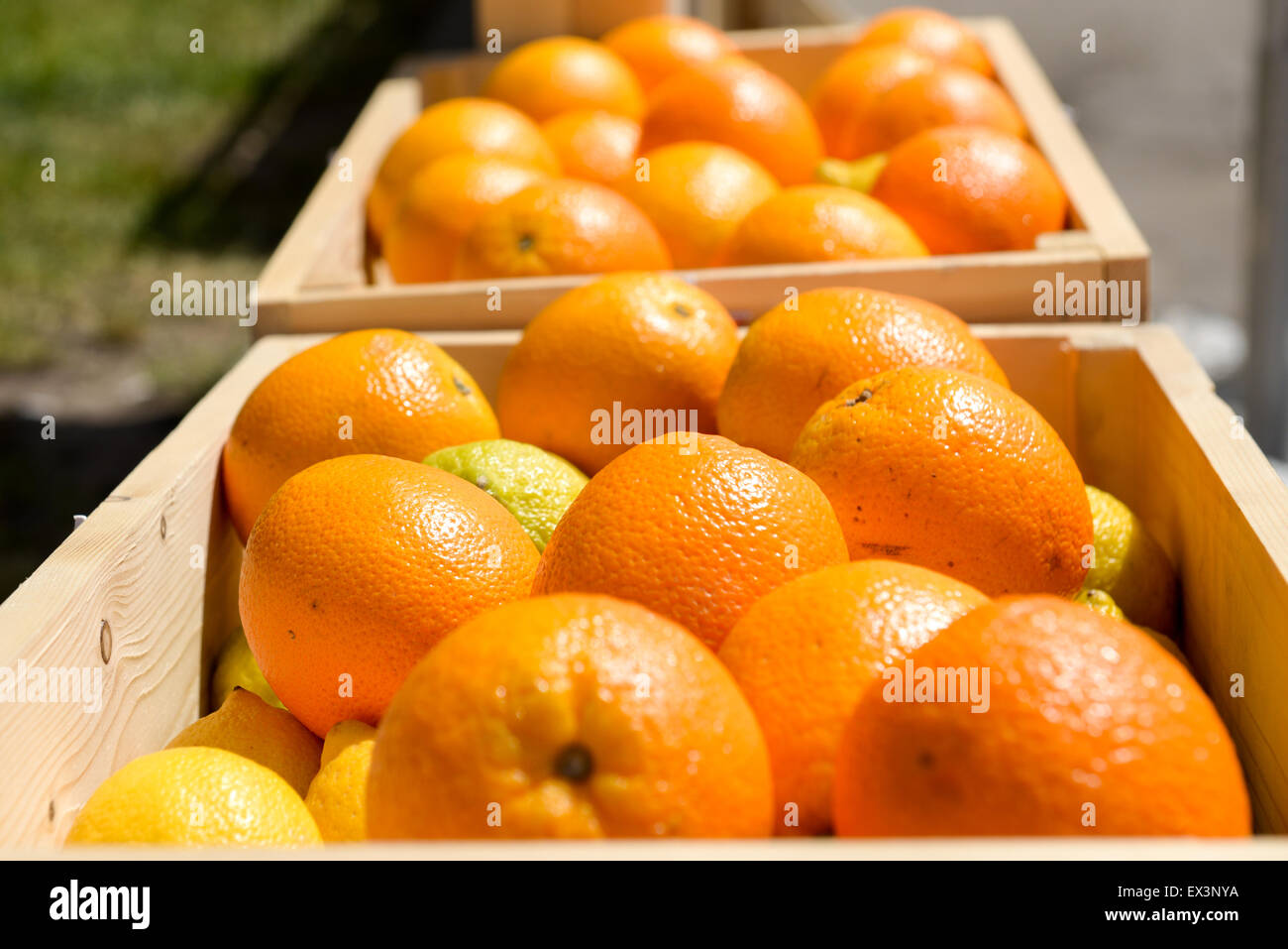 Lot Of Ripe Oranges In Wooden Crates