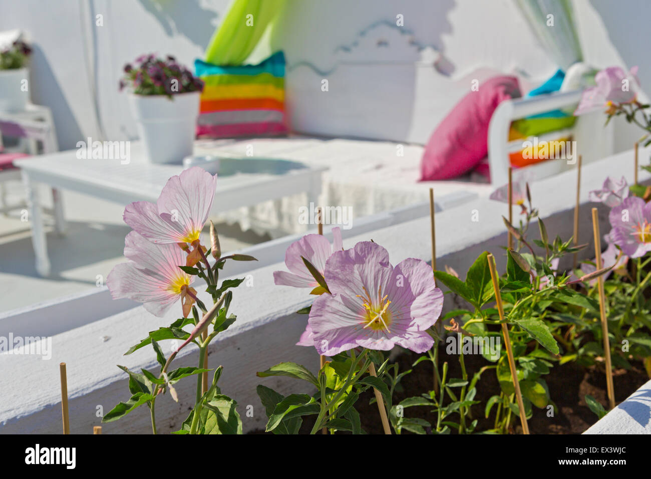 Cozy table and a sofa in cafe, focus on flowers - Stock Image