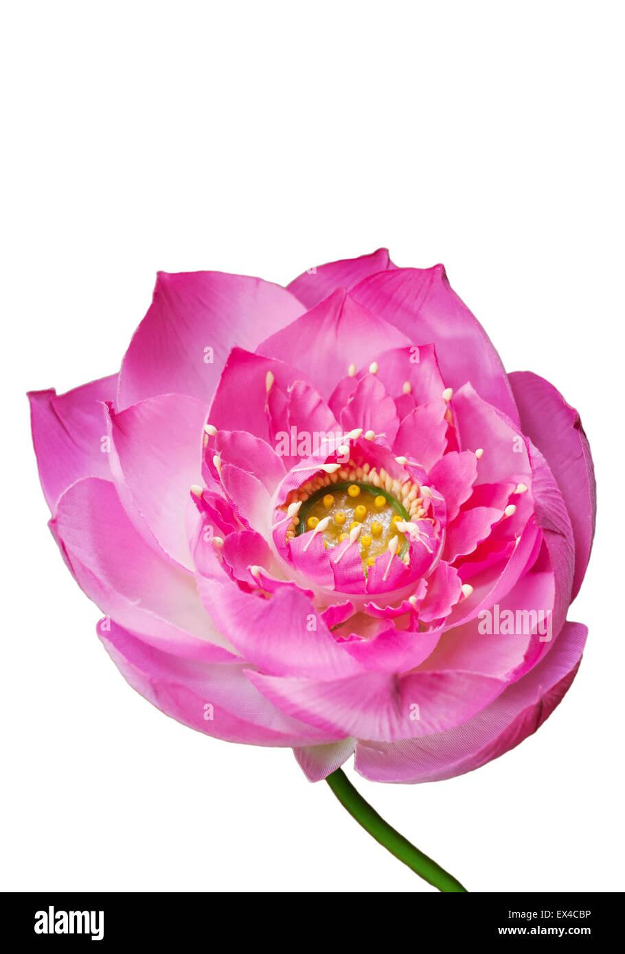 Artificial Lotus Flower Stock Photos Artificial Lotus Flower Stock